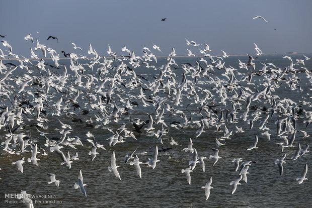 Migratory birds return to Shadegan wetland