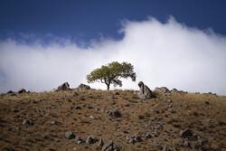 مهرجان الحفاظ على البيئة والغابات / صور