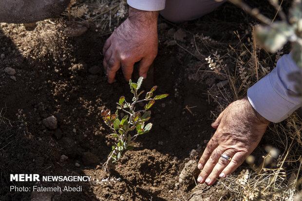 مهرجان الحفاظ على البيئة والغابات