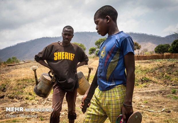 کودکان کار در مزارع تنباکوی مالاوی