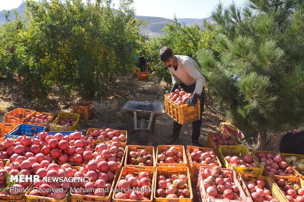 تورم تولیدکننده زراعت و باغداری ۵۵.۴ درصد شد