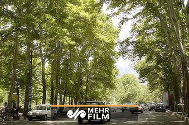 قلع و قمع درختان خیابان الف ولنجک