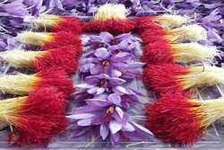 Iran accounting for 90% of world's saffron output