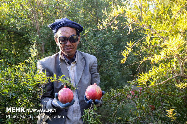 1st 'Pomegranate' Festival in Mehriz