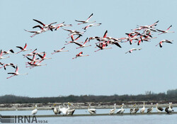 Migratory birds arrive in Gulf of Gorgan, Ashuradeh Island