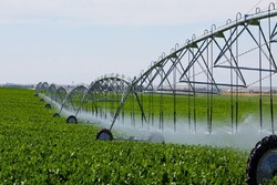 Urmia hosts intl. congress on irrigation, drainage