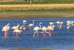Aq-Gol wetland hosts flocks of migratory birds