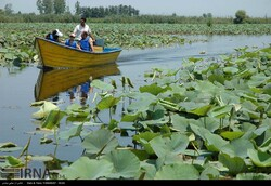 Travelers tour the Anzali wetland in northern Iran.