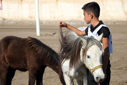 Ardakan hosts horse beauty festival