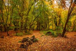 Hirkan Ormanlarından kartpostallık fotoğraflar