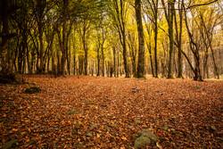 الخريف وما يضفيه من جمال للغابات الهيركانية في شمال ايران / صور
