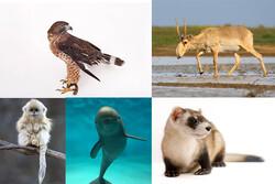 حیوانات در حال انقراض را بشناسید