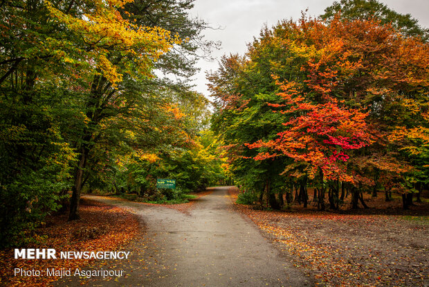 Mesmerizing beauty of Iran's northern forests in autumn