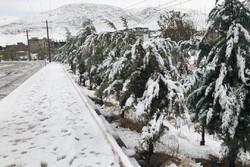 اردبیل میں ژالہ باری