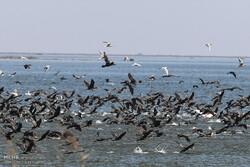Hour al-Azim wetland hosting flocks of migratory birds