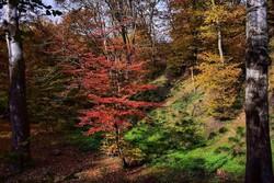 الطبيعة الخريفية في غابات كلستان/صور