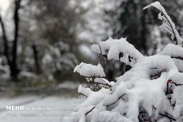 بیلجیئم میں سردی کے باعث غربت میں اضافہ کا خدشہ