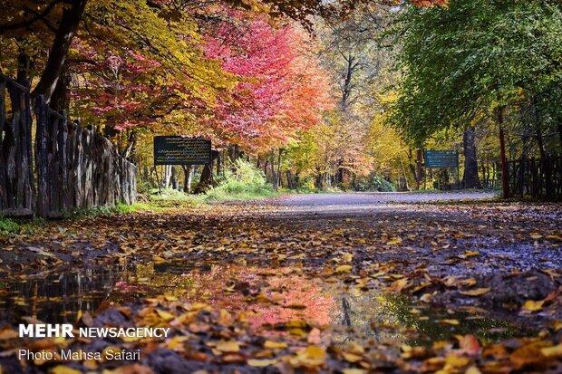 طبیعت پاییزی گلستان