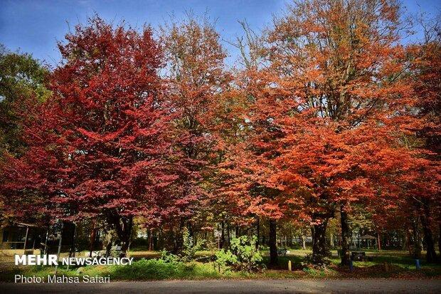 Kış mevsiminin yavaş yavaş gelmesini gösteren renkler