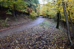 جنگلهای اطراف کرج توسعه مییابد
