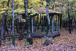 """حديقة غابة """"بي بي يانلو"""" بشمال إيران في موسم الخريف/صور"""