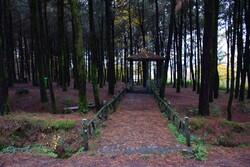 احداث بوستان جنگلی مسگرآباد در منطقه ۱۵