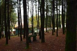 ارتقاء کیفیت خدمات رسانی به شهروندان در ۵ بوستان جنگلی