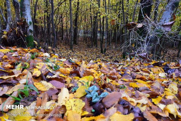 Bibi Yanlu forest park in autumn
