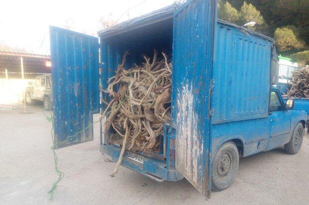 ۳۰ قاچاقچی چوب درختان جنگلی، تاغ و گز در شاهرود دستگیر شدند