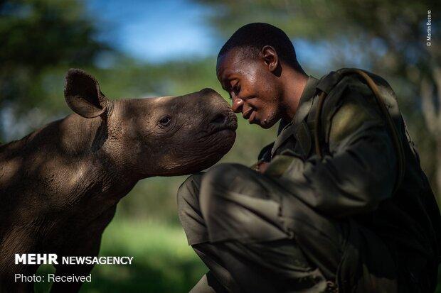 التصفيات النهائية لمسابقة التصوير الفوتوغرافى للحياة البرية لعام 2019