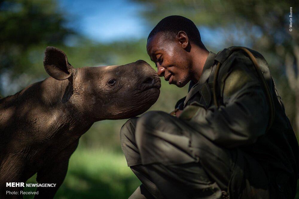 فینالیست های مسابقه عکاسی حیات وحش ۲۰۱۹