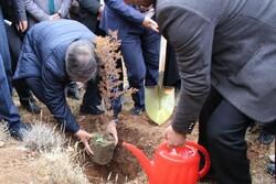 ۷۰ درصد بارندگیها در استان سمنان تبخیر میشود/ ضرورت توجه به درختکاری