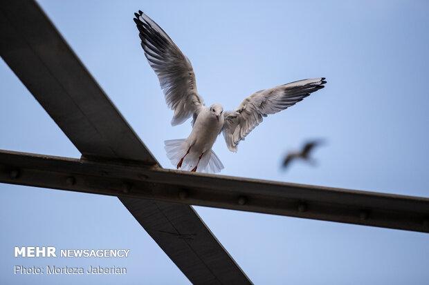 Migratory birds return to Karun