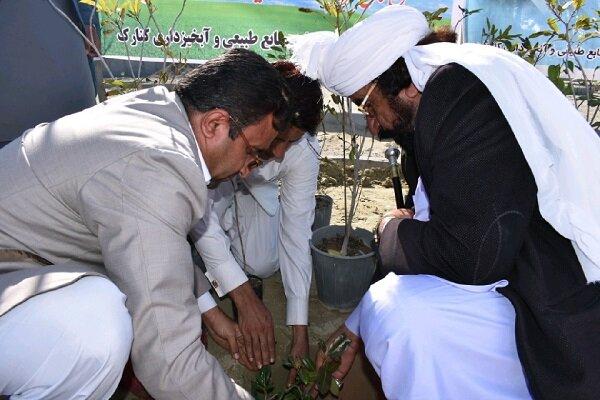 مراسم نهضت درختکاری در «زرآباد» کنارک برگزار شد