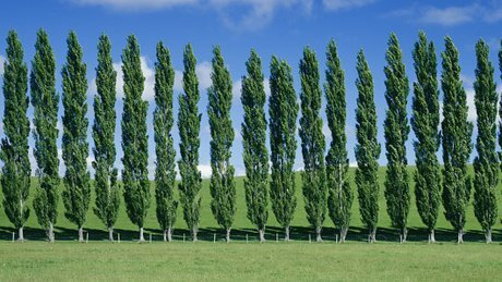 55m saplings to be planted in Iran within 4 months
