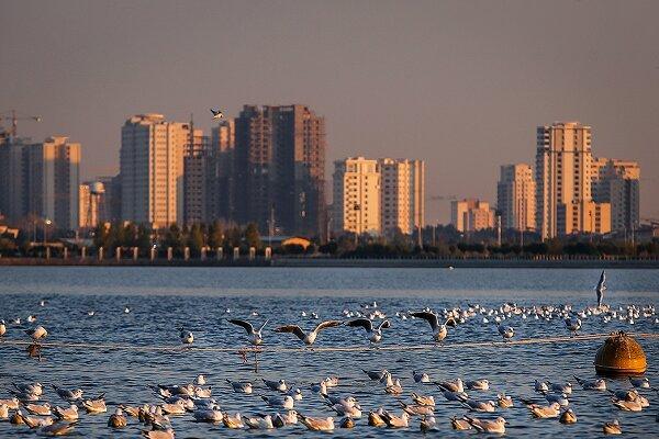Chitgar Lake hosting migratory birds passing Tehran