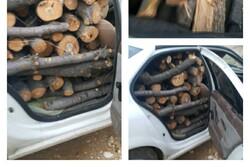 بیش از ۲۸۰۰ کیلوگرم چوب قاچاق در سمیرم کشف شد