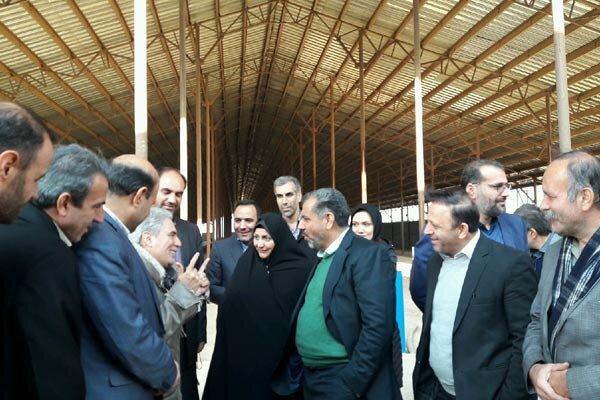 استاندار قزوین از بزرگترین مرکز پرورش گوسفند کشور بازدید کرد
