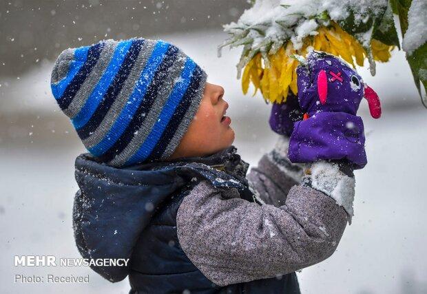 صور مختارة للطبيعة لعام 2019