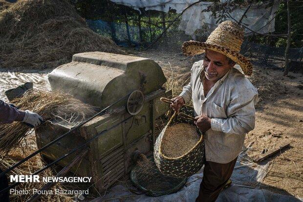 محمود جهانی اهل روستای تورانسرا کوچهصفهان است.او 51 سال دارد و از کودکی کشاورزی کرده است