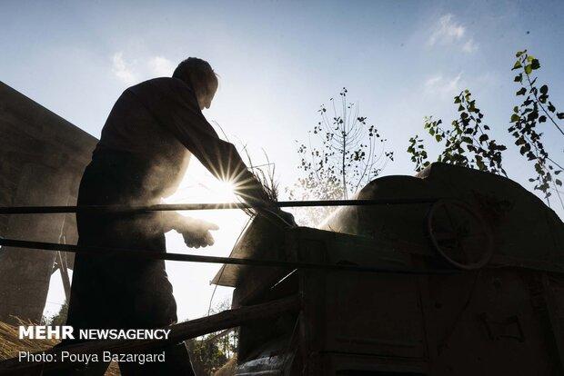 او از معدود کسانی است که هنوز هم مراحل کشاورزی را به صورت سنتی انجام می دهد