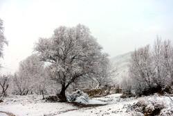 Urmiye kentinden kar manzaraları