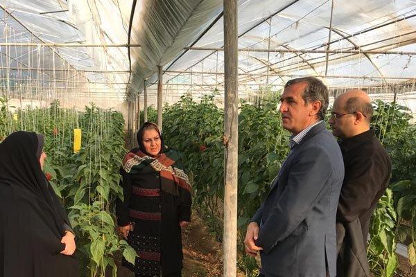 سایت تولید محصول گواهی شده در حمید آباد قزوین ایجاد می شود