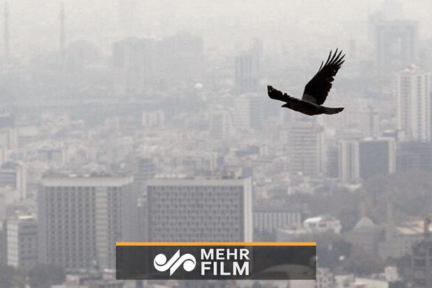 آلودگی تا سهشنبه ادامه دارد