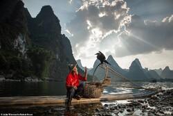 اصطياد السمك بطريقة الصياد الصيني/صور