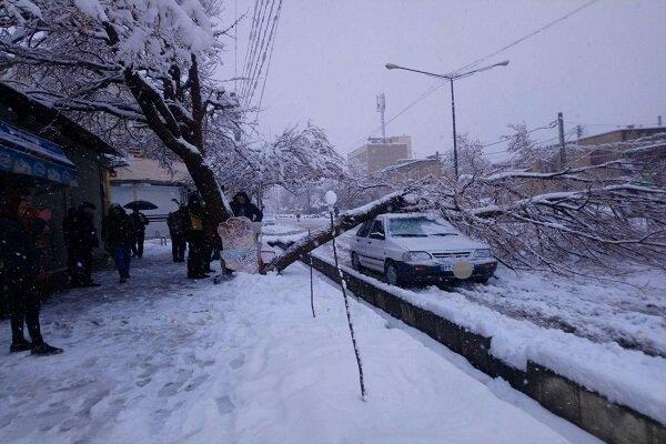 شکستگی درختان در پی بارش برف در چهارمحال و بختیاری