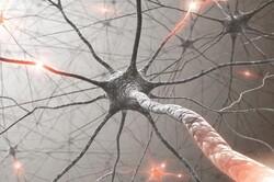 داروی ضدسرطان ژنهای خاص را هدف میگیرد