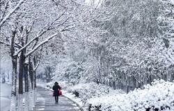 آغاز هفته با بارش برف و باران/ توصیههای هواشناسی به کشاورزان کرمانشاهی