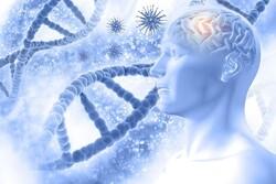 ویرایش ژن ها راهی برای اجتناب از آلزایمر