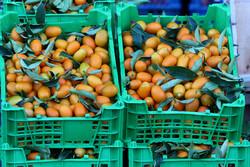 تحقق طرح «هرمحله یک بازار میوه وتره بار» درغربیترین منطقه پایتخت